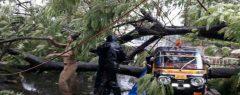 കനത്ത മഴ, കണ്ണൂരിൽ ഓട്ടോറിക്ഷയ്ക്കുമേൽ മരം വീണ് യാത്രക്കാരിക്കു ദാരുണാന്ത്യം
