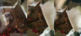 എങ്ങും വെള്ളം മാത്രം, ഒടുവിൽ അഭയം തേടിയത് വീടിന്റെ കിടപ്പുമുറിയിൽ; അസമിലെ വെള്ളപ്പൊക്കകാഴ്ചകളിൽ കടുവയും….