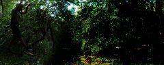 ഒരുരാത്രി മുഴുവൻ വനത്തിലെ മരത്തിന് മുകളിൽ; തെന്മലയിൽ കാട്ടുപോത്തിനെ കണ്ടു പേടിച്ചോടി കട്ടിൽ കുടുങ്ങിയ കോട്ടയം സ്വദേശി യുവാവിനെ രക്ഷപ്പെടുത്തി