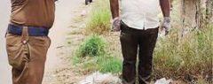 വൈദ്യുതാഘാതമേറ്റ് മയില് ചത്തു; ഔദ്യോഗിക ബഹുമതികളോടെ സംസ്കാരം
