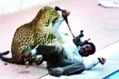 ബംഗളുരു നഗരപ്രാന്തത്തിലെ സ്കൂളില് പുള്ളിപ്പുലി, ആറു പേര്ക്ക് പുലിയുടെ ആക്രമണത്തില് പരിക്ക്