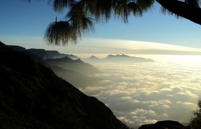 പോകാം  കൊളുക്കുമലയിലേക്ക്, കാണാം ലോകത്തെ ഏറ്റവും ഉയരംകൂടിയ തേയിലത്തോട്ടം;  കാഴ്ച്ചയുടെ പൊൻവസന്തം ഒരുക്കി നിങ്ങളെ കാത്തിരിക്കുന്നു
