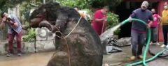 അഴുക്കുചാലിൽ രാക്ഷസ എലി, ഒരാൾ പൊക്കം; കണ്ടവർ ഞെട്ടി, പിന്നെ സംഭവിച്ചത്