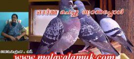പ്രാവ് : ഓർമ്മചെപ്പു തുറന്നപ്പോൾ . ഡോ.ഐഷ . വി. എഴുതുന്ന ഓർമ്മക്കുറിപ്പുകൾ – അധ്യായം  54