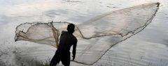 പൊതുജലാശയത്തിൽ നിന്നും പിടിക്കുന്ന കരിമീന് നീളം നിശ്ചയിച്ച് സർക്കാർ; ലംഘിച്ചാൽ ശിക്ഷ