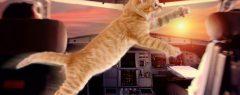 ദോഹയിലേക്കുള്ള വിമാനത്തിന്റെ കോക്ക്പിറ്റിൽ പൂച്ച, പൈലറ്റിനെ ആക്രമിച്ചു; അടിയന്തരമായി നിലത്തിറക്കി….