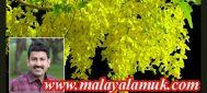 സ്വർണ്ണനിറമുള്ള കണിക്കൊന്നപ്പൂക്കൾ പൂത്തുലഞ്ഞിരിക്കുന്നു : മെട്രിസ് ഫിലിപ്പ്.  മലയാളംയുകെ വിഷു  സ്പെഷ്യൽ